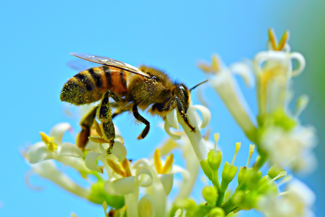 honey-bee-4314838_1920